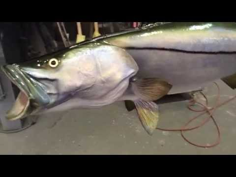 Snook Ceiling Mount - Gray Taxidermy Fishmounts, Custom fish reproductions