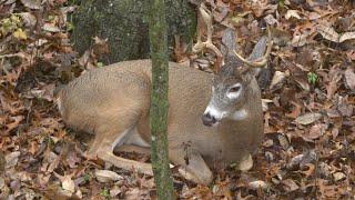 Top 5 Deer Hunting Myths