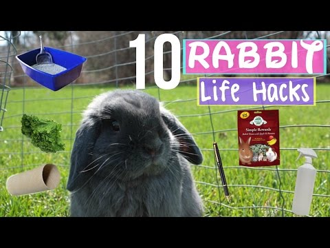 10 Life Hacks EVERY Rabbit Owner NEEDS To Know!