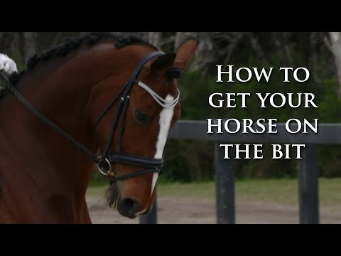 How to Get Your Horse On The Bit (Made Easy) - Dressage Mastery TV Ep39