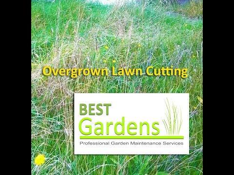 Overgrown Lawn Cutting