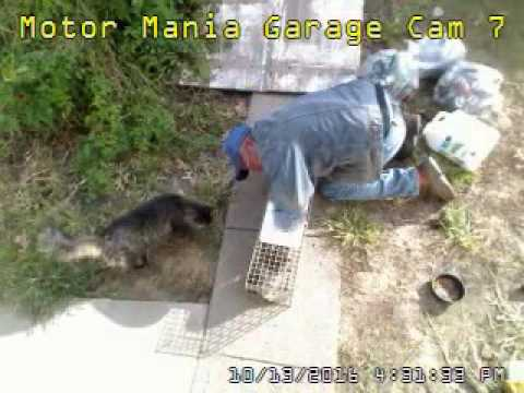 Pregnant Stray Momma Kat Captured in Live Trap