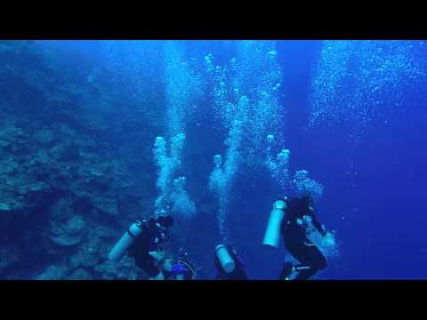 Shark Does NOT Attack Scuba Diver