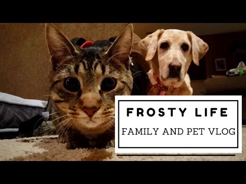 Family and Pet Vlog