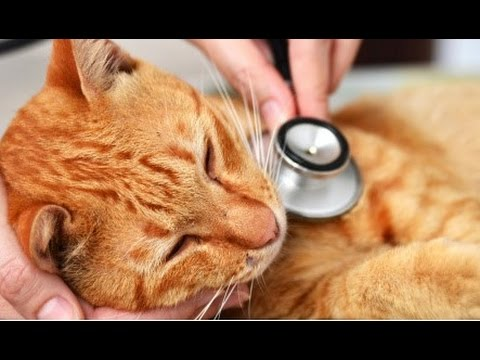 Home Remedies for Sick Cats