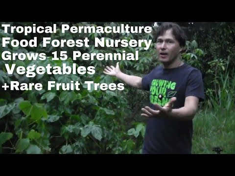 Tropical Permaculture Food Forest & Nursery Grows Perennial Vegetables + Rare Fruit Trees