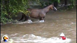 Incredible Hurricane Harvey Horse Rescue | The Dodo