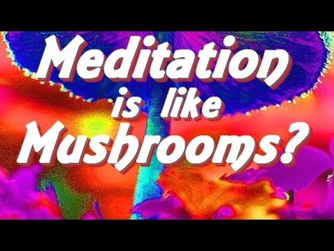 Meditation Is Like Magic Mushrooms? Scientifically Exploring the Brain