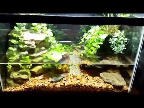Crayfish Tank Update 8/1/16