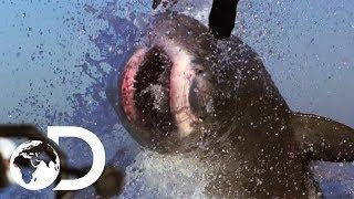 The Most Epic Shark Week Moments!   Shark Week