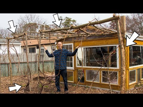 How To Make A FREE Grape Arbor!