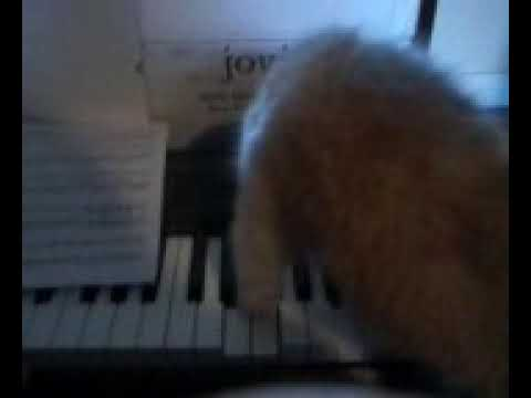 Puppy playing the piano.