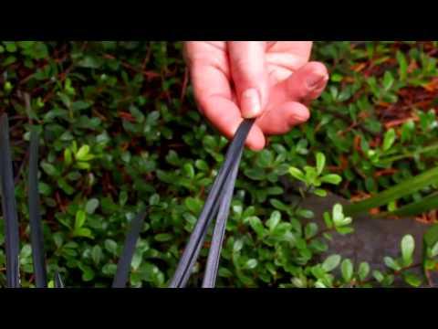 How to Start a Perennial Garden