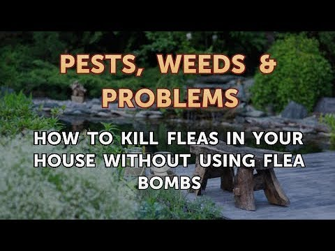 How to Kill Fleas in Your House Without Using Flea Bombs