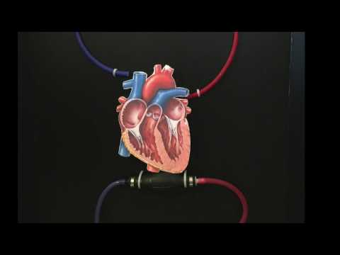 How to Make a Model of Actual Pumping Heart