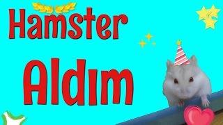 HAMSTER ALDIM :) ADI SAFTİRİK (GONZALES HAMSTER)