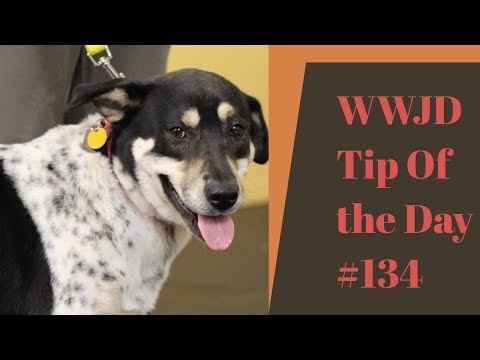 Reactive Dogs, What Would Jeff Do? Dog Training Tip of the Day #134