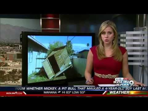 Puppy dies after Killer Bee Attack on Tucson's East Side | Arizona Pest Control