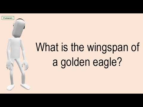 What Is The Wingspan Of A Golden Eagle