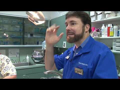 Pulse Oximeters on Ferrets - Veterinary Knowledge Bomb