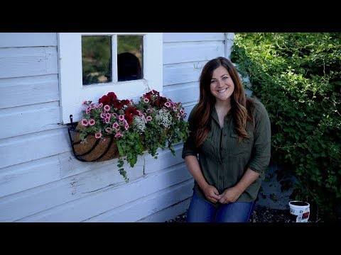 Planting our Potting Shed Window Basket 🌸🌺🌿// Garden Answer