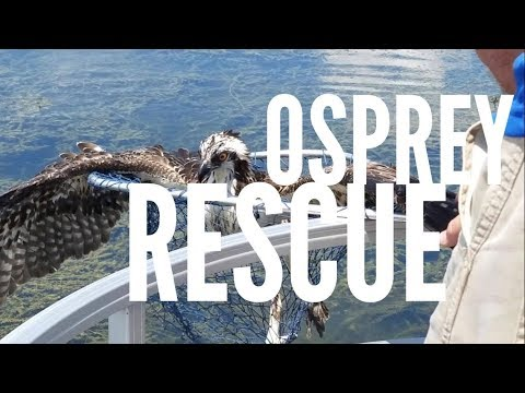 Osprey Rescue