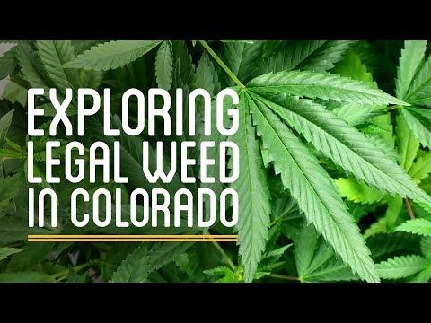 Exploring the Legal Pot Industry in Colorado