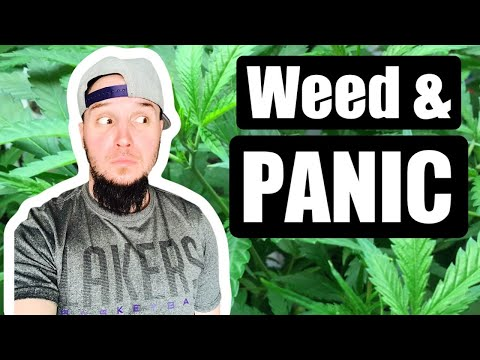 Weed and Panic Attacks - How To Make Them Stop