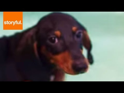 Nervous Dachshund Learns To Swim In Tub (Storyful, Dogs)