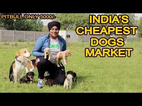 Download Cheapest Dog Market in Delhi | Pitbull , Bully , Saint