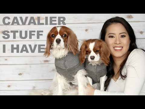 CAVALIER GEAR / STUFF | Everything I have | Crazy Dog Mom Collection