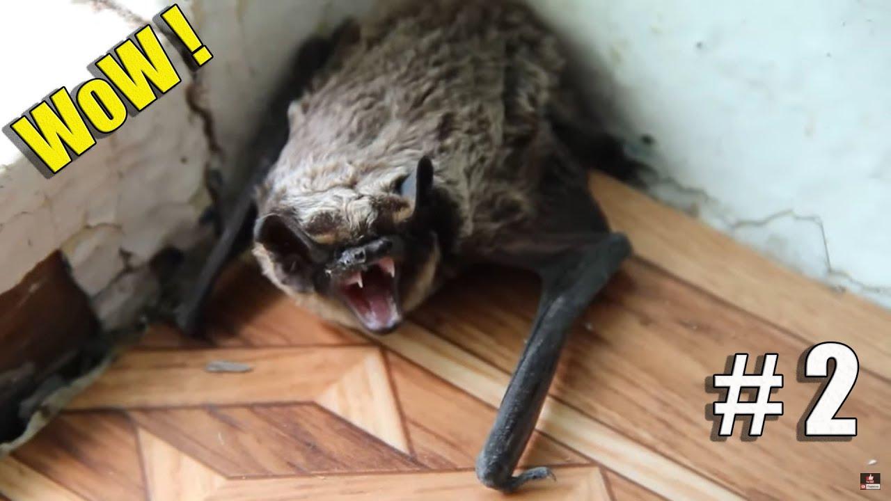 Самые невероятные случаи вторжения диких животных в дома людей #2