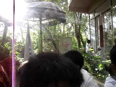 Bali Barong Kids.MPG