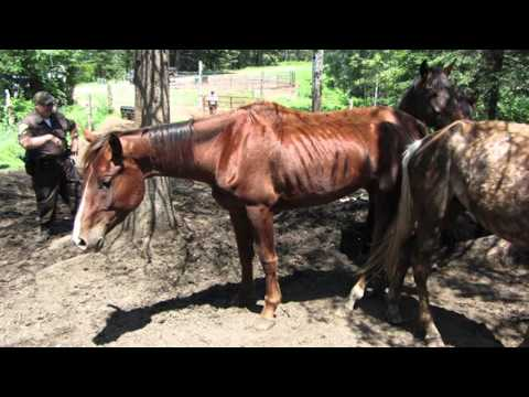 Support Piper's Rescue Ranch and Help Save Animal Lives