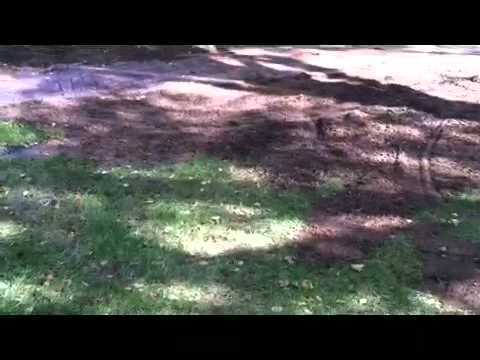 How to deal with tree roots in a lawn