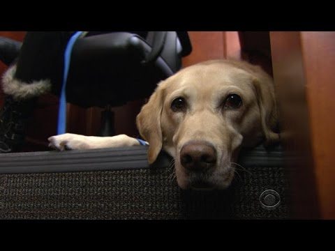 Comfort dogs help traumatized children through court proceedings