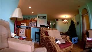 Tiny Whoop Goes Hd! (cyclops 3 720p Dvr Camera)