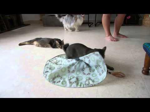 Skittish cats