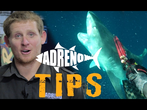 Spearfishing with Sharks (Tigers, White Pointers, Bullsharks)  | ADRENO
