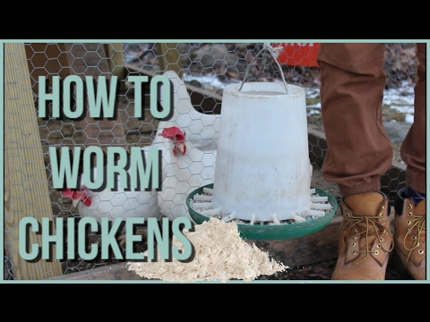 HOW TO Worm Chickens | NATURAL