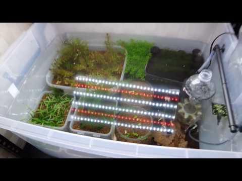 My Crystal Red Shrimp tank setup.