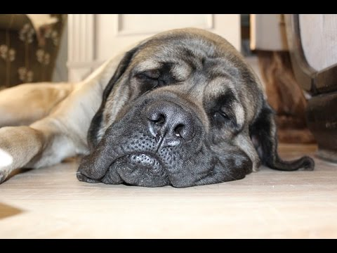 Is My Dog Depressed? Dog Depression - Signs & Symptoms