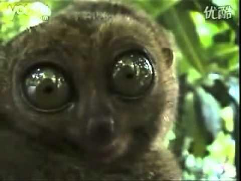 Finger Monkey Video on Youtube