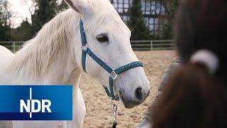 Tierschutz: Die Tierflüsterer   DIE REPORTAGE   NDR Doku