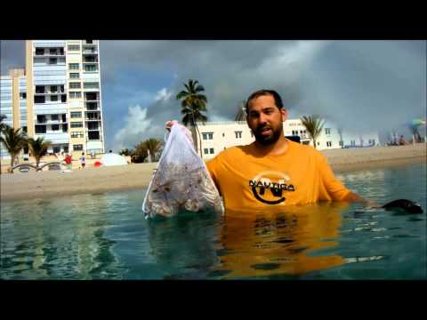 How to Catch and Clean Florida Lobster