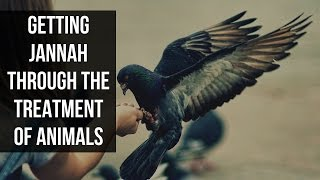 Getting Jannah Through The Treatment of Animals - Mufti Menk