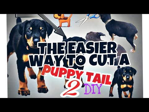HOW TO CUT DOBERMAN Mix PUPPY TAIL(PAINLESS) AT HOME PART 2 (DIY)