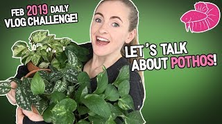 Pothos Plant Varieties - All of Mine, Including Rare Ones! February Daily Video #11