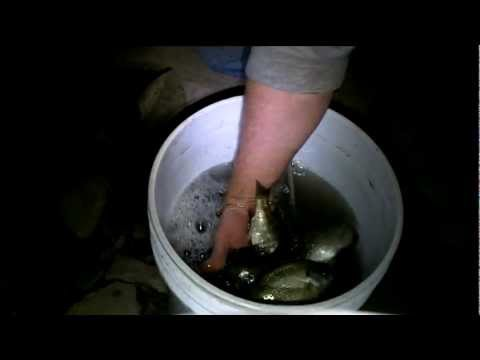 How to keep your bait fish alive all night long