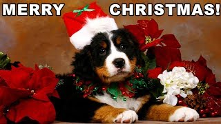 Christmas Puppy Surprise Compilation 2017 - 2018 [NEW]